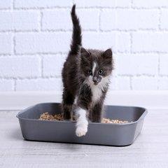 Kattenbakvulling