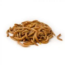Meelworm